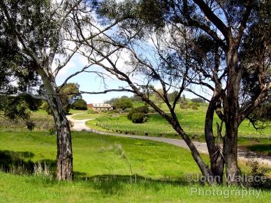 Vineyard at Bethany, South Australia