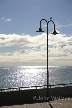 Seagull on lamp standard