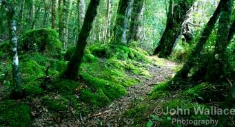 Woodland New Zealand