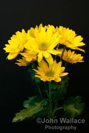 Floral gold