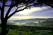 Sunrise in the Barossa Valley