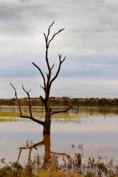 Digitised Dead Tree