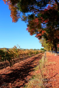 Autumn in the Barossa Valley, South Australia