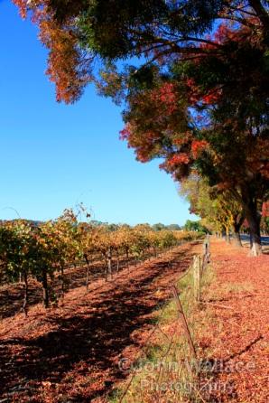 Autumn in the Barossa Valley, South Australia