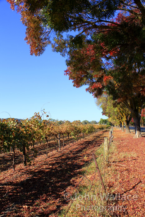 Autumn in the Barossa Valley