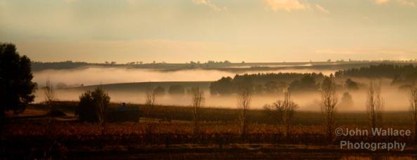 Morning mist in the Barossa Valley