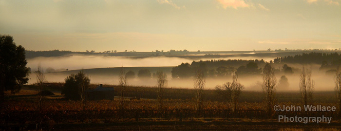 Morning mist in the Barossa Valley