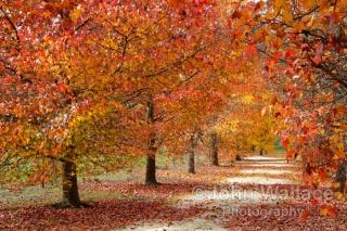 Autumn Pathway