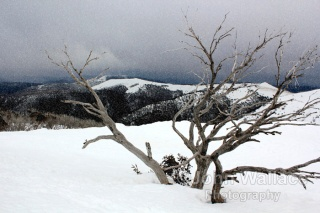 Snow on the mountainside in Victoria