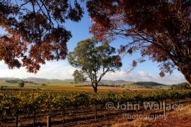 Barossa Landscape Australia