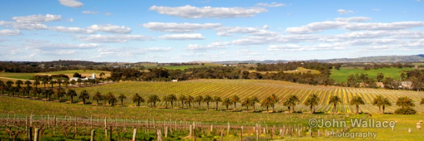 Springtime in the Barossa Valley