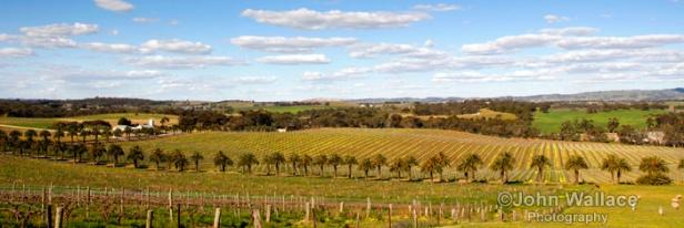 Springtime in the Barossa Valley South Australia