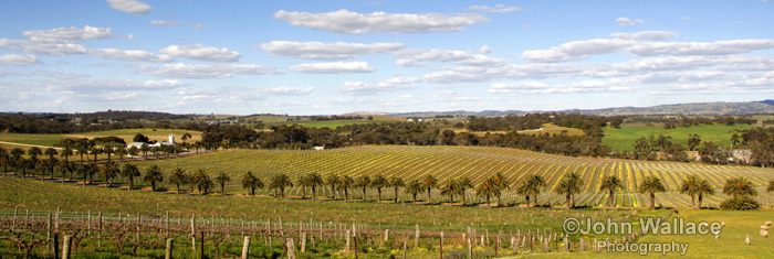 Springtime in the Barossa Valley South Australia
