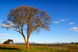 Late sunshine in the Barossa