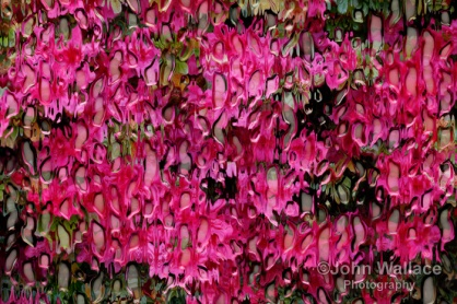 Melting Flowers Abstract