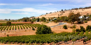 Summer in the Barossa Vineyards, South Australia
