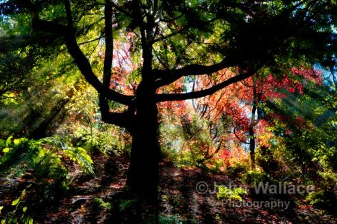 Autumn sunlight creates enchantment in the wood