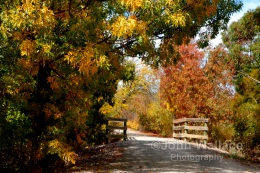 Autumn sunshine highlights the colours in the trees for this pathway in the countryside of the Clare Valley South Australia