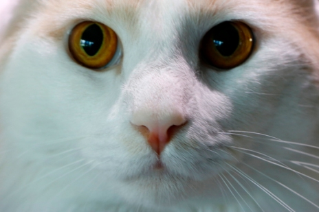 Up close and personal on this feline