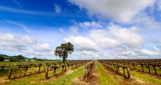 Spring among the vines in the Barossa Valley South Australia