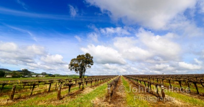 Barossa Valley Springtime