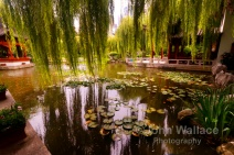 Chinese Garden Solitude
