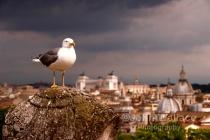 Birds Eye View of Rome
