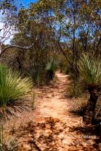 Bushland hiking trail on Kangaroo Island, South Australia