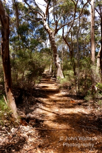 Bushland walking trail on Kangaroo Island, South Australia