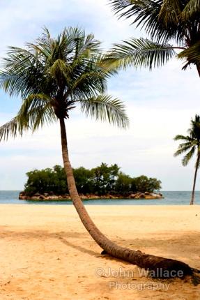 A palm beach in Singapore